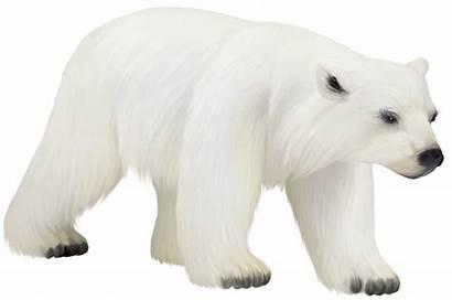 Bear Polar Transparent Clipart Painted Animals Clip