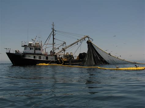 Fishing Boat Net by Ucr Today Sardine Fishing Boat