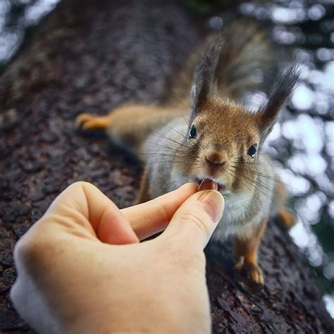 squirrel whisperer photographer feeds wild animals