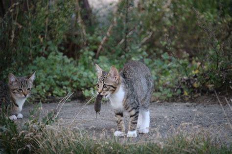 wenn die katze maeuse mitbringt sei ihr nicht boese