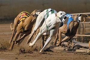 Sprinter - Greyhound Star | News from the Greyhound Industry