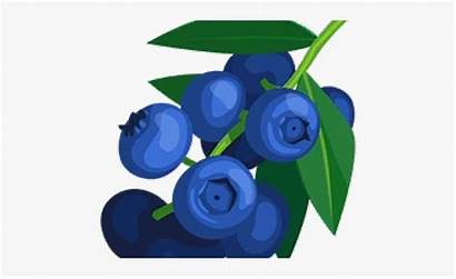 Clipart Blueberry Tree Blueberries Webstockreview Jing Cliparts