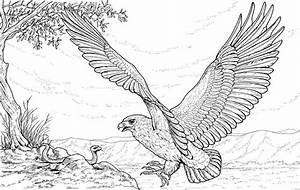 Galería de imágenes: Dibujos de águilas