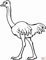 Ostrich Coloring Drawing Pages Clipart African Silhouettes Printable Super Main sketch template
