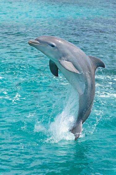 el delfin el ciberperiodico de sek alboran