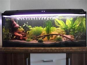 Pflanzen Die Schnell Hoch Wachsen : wie schnell wachsen die pflanzen aquarium forum ~ Michelbontemps.com Haus und Dekorationen