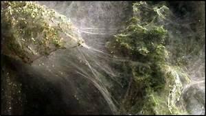 Faire Fuir Les Araignées : invasion d 39 araign es au pakistan 1 tour d 39 horizon ~ Melissatoandfro.com Idées de Décoration