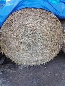 Heu Kaufen Für Pferde : heu rundballen kaufen heu rundballen gebraucht ~ Orissabook.com Haus und Dekorationen