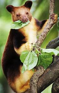 Baby Marsupial Mammals