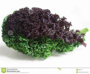 Fresh curly kale leaves stock image. Image of detail ...