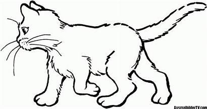 Ausmalbilder Katzen Ausmalen Zum Katze Cat Ausmalbild