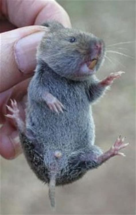 how to get rid of voles great ways to get rid of voles