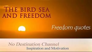 The bird sea an... Freedom At Sea Quotes