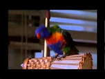 Ace Ventura Pet Detective: What do you Suggest? - In the ...