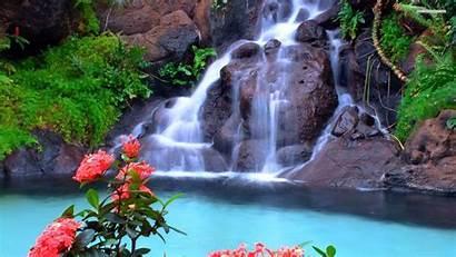 Waterfall Desktop Wallpapers Flowers Nature Rainforest Pink