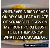 CAR HUMOR Food Chain  Car Humour Funny Pix