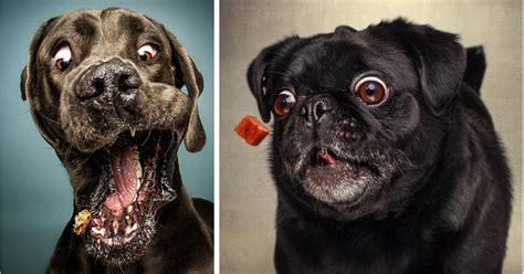 funny faces  dogs   catch treats top