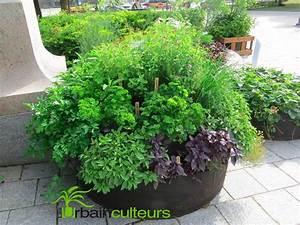 Quoi Planter En Automne : legumes a planter en mars les l gumes semer en mars ou ~ Melissatoandfro.com Idées de Décoration