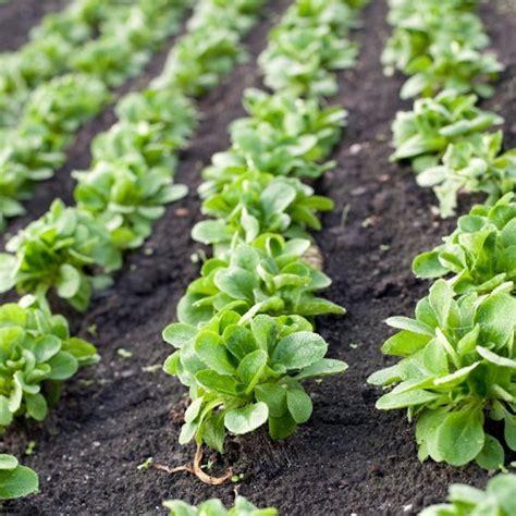 quoi planter en septembre que planter en septembre 15 id 233 es 224 semer et 50 photos pour se r 233 galer archzine fr