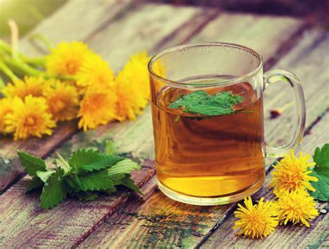 dandelion leaf tea benefits history recipes side effects