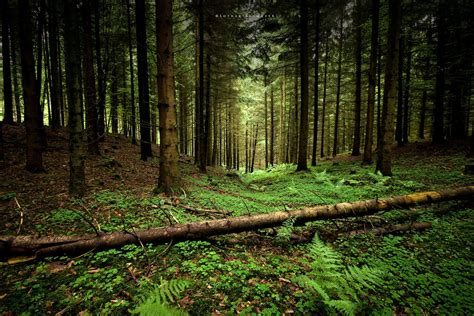 Страхование леса Challenge