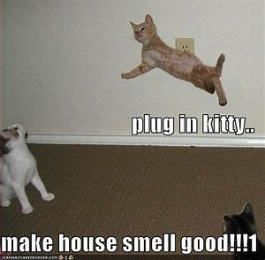 Funny Picture: Funny cat pictures with captions
