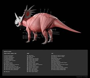 Muscle Diagram 4 By Red