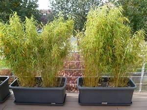 Bambou En Pot Pour Terrasse : quelle terre pour bambou en jardiniere pivoine etc ~ Louise-bijoux.com Idées de Décoration