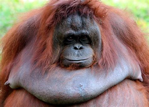A Big Ugly Monkey