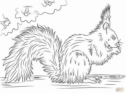 Squirrel Coloring Pages Nut Eating Printable Squirrels