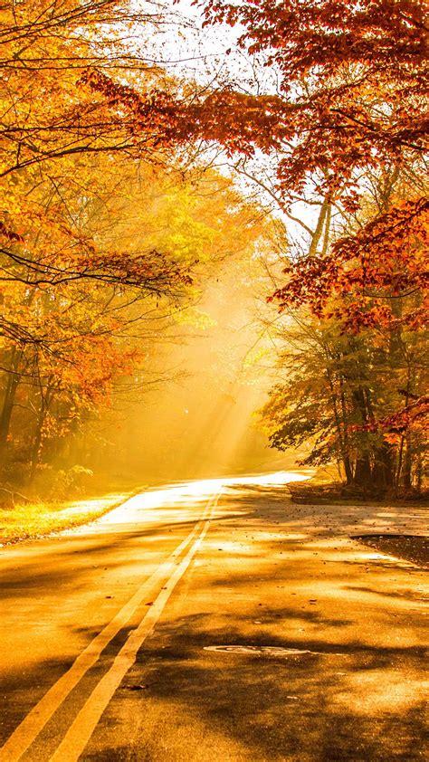 fall foliage autumn road   ultra hd mobile wallpaper