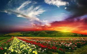 Flower Landscape with Sunset HD Wallpaper | Ideas for the ...