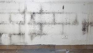 Schimmel An Der Wand Entfernen : schimmel entfernen dauerhaft beseitigen raum analyse ~ Michelbontemps.com Haus und Dekorationen