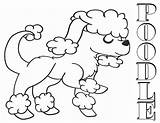 Poodle Coloring Pages Animal sketch template
