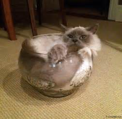 how is a cat cats are liquid