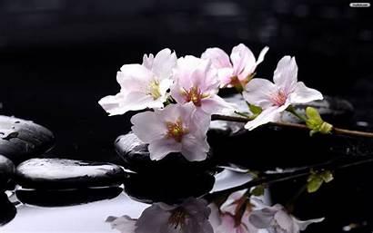 Magnolia Background Labarre Andrea
