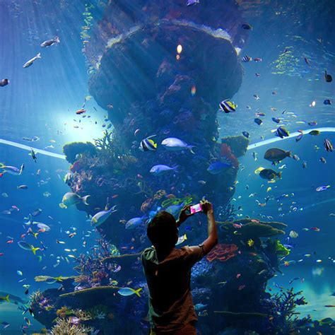 the sea aquarium s e a aquarium yoursingapore