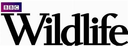 Wildlife Bbc Magazine Contest Monthly Cornforth Jon