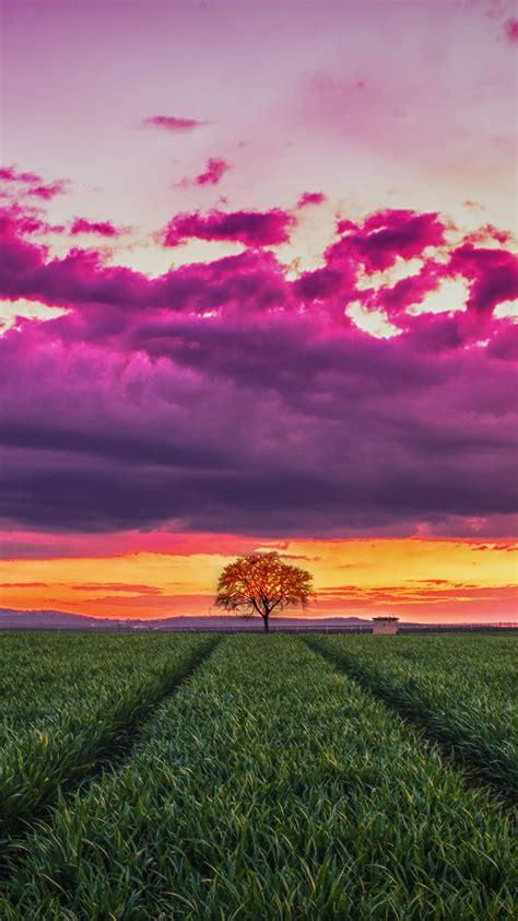 wallpaper sunset field grass sky clouds  nature