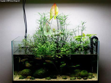 riparium nouvelle mode flore aquatique plantes
