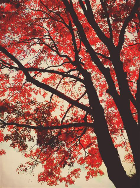 Red Forest Tumblr
