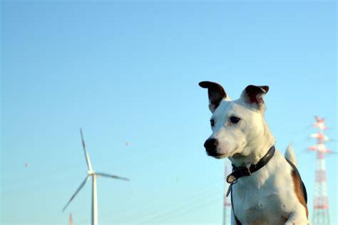 jack russel terrier unerschrocken und ausdauernd