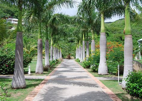 royal palm trees for sale fort myers