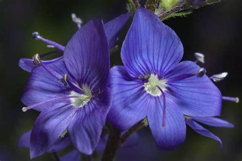 Fiore Flowers by Fiori Di Fiori Di Piante