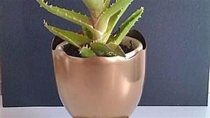 Pflanzen Bewässern Pet Flaschen : pflanzen bertopf in pokalform aus pet flasche basteln frag mutti ~ Whattoseeinmadrid.com Haus und Dekorationen