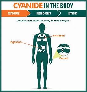 Understanding Cyanide Poisoning | CYANIDE INSIGHT