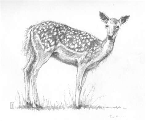 easy cute animal drawings  pencil   sketch animals