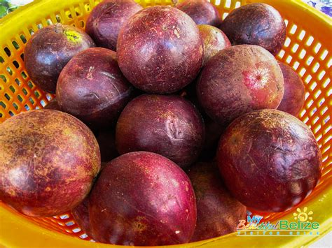 The Caimito Or Star Apple My Beautiful Belize