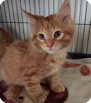 pin  jen fullem  places  visit kittens pets cats