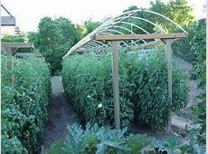 Building a Tomato Trellis YouTube